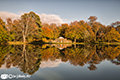 Gosford Estate Autumn colours 2nd November 2017