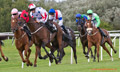 Musselburgh Races 20th August 2014