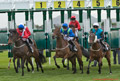 Musselburgh Races 22nd April  2015