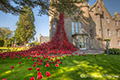 Poppies Weeping Window at The Black Watch Museum Perth